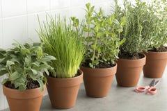 Fileira de potenciômetros marrons da terracota com ervas frescas Foto de Stock Royalty Free