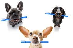 Fileira dental da escova de dentes dos c?es imagem de stock royalty free