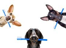Fileira dental da escova de dentes dos c?es fotos de stock royalty free