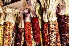 Fileira do milho indiano unido imagens de stock royalty free