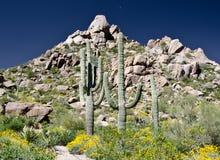 Fileira do Saguaro sob o pico do pináculo Fotografia de Stock