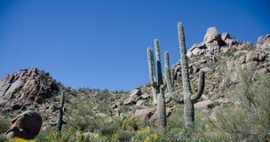 Fileira do Saguaro sob o pico do pináculo Fotografia de Stock Royalty Free