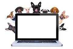 Fileira dos cães atrás do cartaz ou da bandeira fotografia de stock royalty free