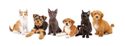 Fileira dos cachorrinhos e dos gatinhos Foto de Stock