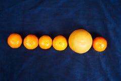 Fileira dos mandarino e de uma laranja Fotografia de Stock Royalty Free