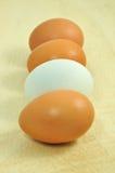 Fileira dos ovos Fotografia de Stock