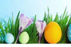 Fileira dos ovos da páscoa na grama Imagens de Stock