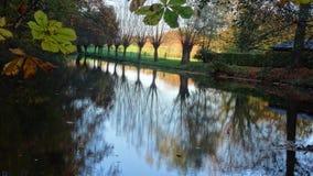 Fileira dos salgueiros refletidos na água Fotos de Stock