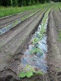 Fileira dos vegetais Imagem de Stock Royalty Free