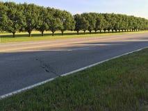 Fileira reta das árvores Imagem de Stock