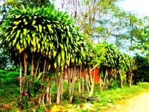 Fileira verde no monte do cascalho Imagem de Stock