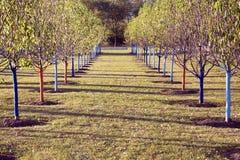 Fileiras da árvore no parque Imagens de Stock Royalty Free
