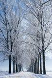 Fileiras das árvores Fotografia de Stock