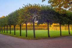 Fileiras das árvores no assim chamado Fotografia de Stock Royalty Free