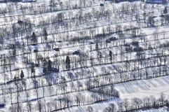 Fileiras das árvores no vale de Isar Foto de Stock Royalty Free