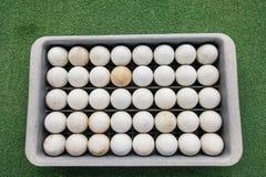 Fileiras das bolas de golfe na bandeja no verde, Koh Pha Ngan, Tailândia Foto de Stock