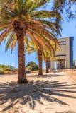 Fileiras das palmeiras e da construção moderna na rua central de Imagens de Stock Royalty Free