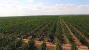 Fileiras de árvores de Apple padrão verdes no grande jardim vídeos de arquivo