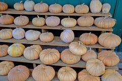 Fileiras de abóboras do campo para a venda Imagem de Stock