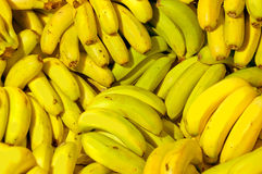 Fileiras de bananas amarelas maduras Foto de Stock Royalty Free