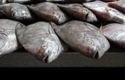 Fileiras de peixes frescos no mercado Imagem de Stock