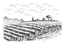 Fileiras de plantas da uva do vinhedo ilustração royalty free