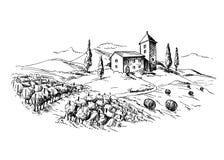 Fileiras de plantas e de casa da uva do vinhedo ilustração do vetor