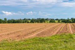 Fileiras de plantas novas da alface no campo de exploração agrícola Fotos de Stock Royalty Free
