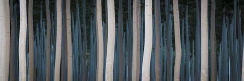 Fileiras dos álamos em uma exploração agrícola de árvore Foto de Stock