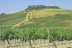 Fileiras dos vinhedos e dos montes de Toscânia em Italy Foto de Stock