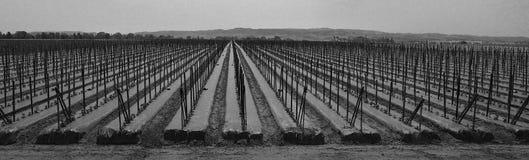 Fileiras na exploração agrícola Fotos de Stock
