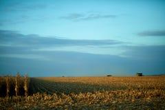 Fileiras secas da colheita da exploração agrícola e maquinaria distante da colheita imagens de stock