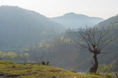 Fileld-Landschaft Stockbild
