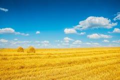 Fileld moissonné de blé avec la paille de deux balles photographie stock libre de droits