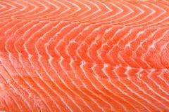 filet семги Стоковая Фотография RF