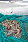 Filet complètement des poissons sur la plage images libres de droits