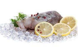 Filet d'anguille avec des épices Images stock
