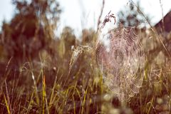 Filet d'araignée Photographie stock