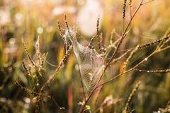Filet d'araignée Photos stock
