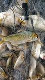 Filet de pêche Photo stock