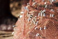 Filet de pêche rouge avec une friture images libres de droits