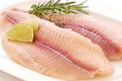 filet de poisson-chat Images libres de droits