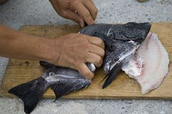 Filet des poissons image libre de droits