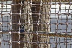 Filet protecteur Photographie stock libre de droits