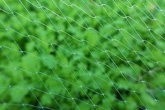 Filet végétal Photographie stock libre de droits