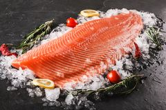 Filete de pescados de color salmón crudo fresco con las especias en el hielo sobre fondo de piedra oscuro Disposición creativa he fotos de archivo libres de regalías