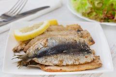 Filete frito de sardinas Fotografía de archivo