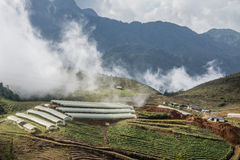Filets de fermes Image libre de droits