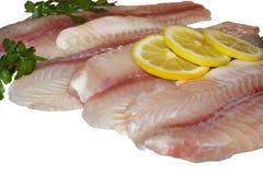 Filets de poissons Photos libres de droits