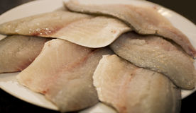 Filets of fresh sea bream Stock Photography